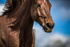 Lovely horse head. Close-up stock images