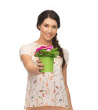Lovely housewife with flower in pot Royalty Free Stock Photo