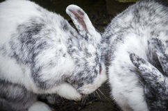 Lovely hugging rabbits Stock Images