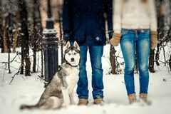 Lovely husky is sitting near the lovers holding hands. View of the legs. Snowfall. Close-up. stock photos