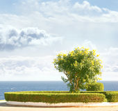 A lovely image of the sky, the blue sea and a tree Royalty Free Stock Photos