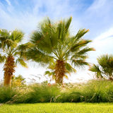 A lovely image of the sky and palm trees Royalty Free Stock Images