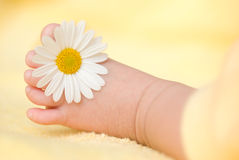 Lovely infant foot with little white daisy Royalty Free Stock Image