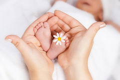 Lovely infant foot with little white daisy. In mothers hands Stock Photography