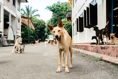 Lovely and kind dogs are sitting near the house royalty free stock images
