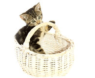 Lovely kitten Royalty Free Stock Image