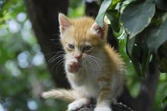 Lovely Kitten. Pretty cat on the tree Stock Images