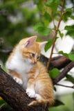 Lovely Kitten. Pretty cat on the tree Stock Photos