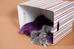 Lovely kitten in a box Royalty Free Stock Images