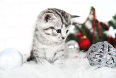 Lovely kitten with Christmas balls and a Christmas tree. Stock Images