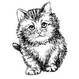 Lovely kitten hand drawn Stock Image