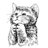 Lovely kitten hand drawn vector Stock Photo