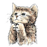 Lovely kitten hand drawn vector Stock Photos