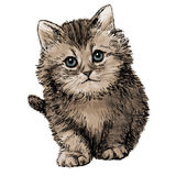 Lovely kitten hand drawn Stock Photography