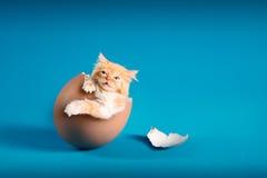 Kitten. Lovely kitten inside broken eggs Royalty Free Stock Images