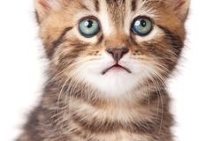 Lovely kitten Stock Photo