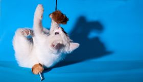 Lovely kitten playing with toy mouse Stock Image
