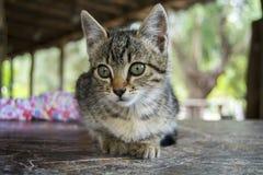 Lovely Kitten Royalty Free Stock Images