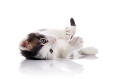 The lovely kitten, white with spots. Royalty Free Stock Photography