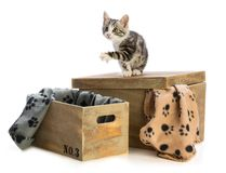 Lovely kitten on wooden box with blankets with paw prints. On white background Stock Photo