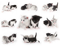 Lovely kittens. Collection of kittens on white background royalty free stock photography