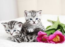 Lovely kittens with flowers royalty free stock photos