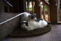 Lovely kittens sleeping on the stairs Royalty Free Stock Image