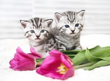 Lovely kittens with flowers royalty free stock image