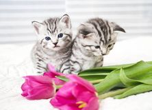 Lovely kittens with flowers stock images