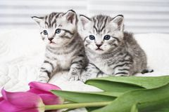 Lovely kittens with flowers royalty free stock photo