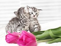Lovely kittens with flowers stock image