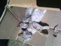 Lovely kitties stock photo