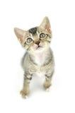 Lovely kitty Stock Photos