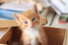 Lovely Kitty Royalty Free Stock Photography