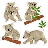 Lovely koala Royalty Free Stock Photo