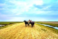 Lovely landscape in rural village !!. Beautiful Bangladesh's village life Stock Images