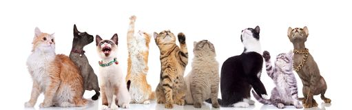 Lovely large group of cats looking up to side stock photos