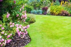 Lovely light pink roses bushes in victorian garden Stock Image