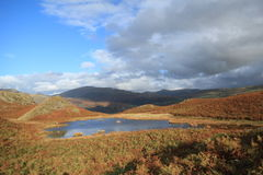 Lovely Lily Tarn.Loughrigg Fell, Cumbria, Uk. Royalty Free Stock Photos