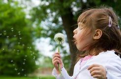 Lovely little blond little girl blowing a dandelion Stock Image