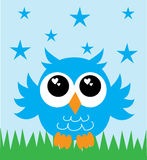 A lovely little blue owl Royalty Free Stock Photo
