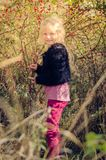 Child picking up healthy rose hip fruits Stock Photography