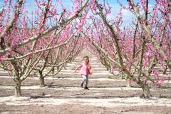 Lovely little girl in a grove of fruit trees. Spain. Lovely little girl in a grove of fruit trees in Cieza in the Murcia region. Peach, plum and nectarine trees royalty free stock image