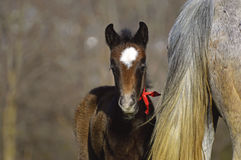 Lovely Little Horse. This beautiful little horse and his mother are enjoying the good weather from the first hours of the morning stock photo