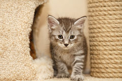 Lovely little kitten royalty free stock photo