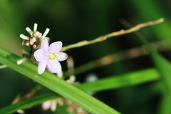 Lovely little wildflowers. I do not know what it is called, white petals, grass green flowers, looks very cute, and particularly small, it is estimated that not Stock Photo