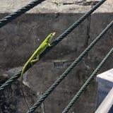 Lovely Lizard royalty free stock photo