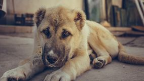 Lovely Lonely Dog Laying On Ground royalty free stock images