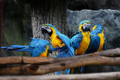 Lovely macaws on the branch Stock Photos