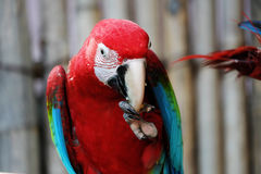 Lovely macaws on the branch Royalty Free Stock Photography